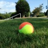 Cary Tennis Park ball in grass